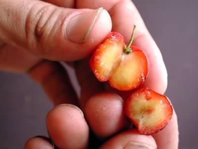 cherry de la varicoseza)