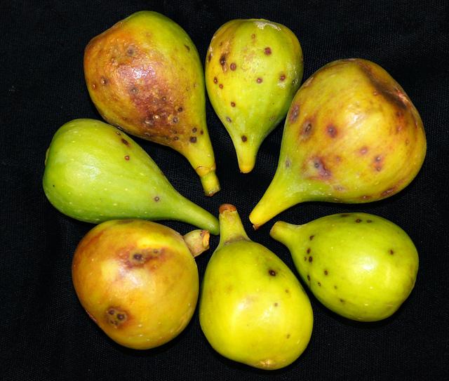 Fig Diseases