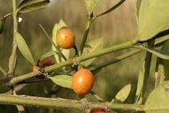 Garcinia cambogia ireland holland and barrett