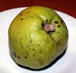 Casimiroa edulis, White sapote fruit