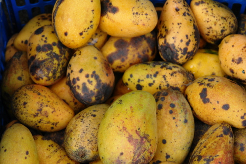 Anthracnose Treatment in Mango Flowers