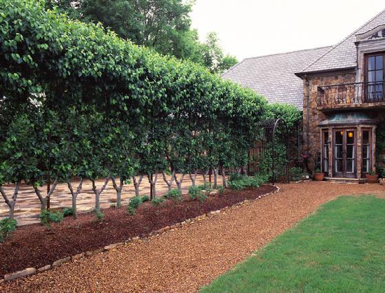 Arbor Backyard